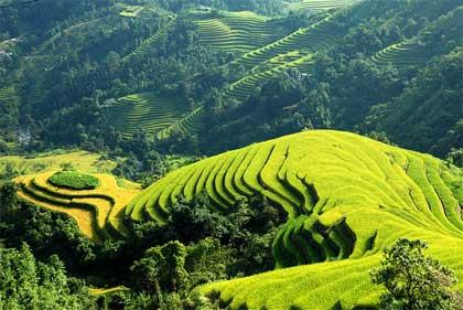 Ruộng Bậc Thang