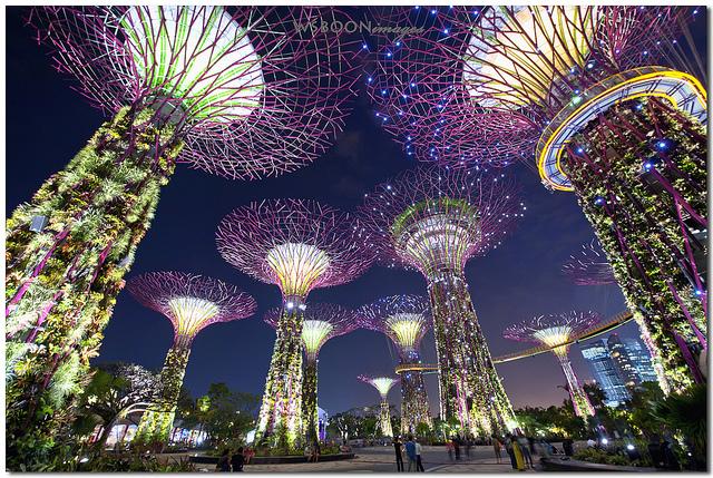 Công Viên Cây Khổng Lồ Ở Singapore