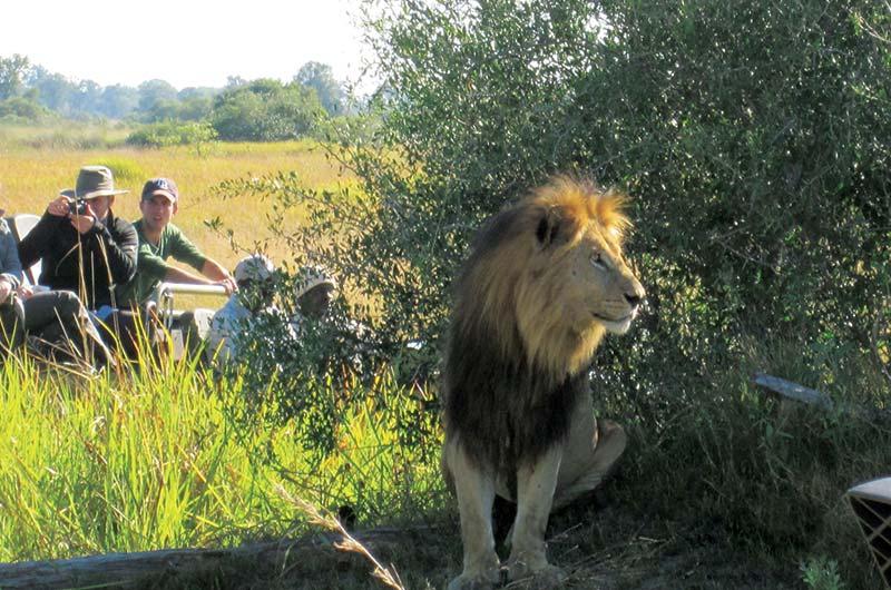 Ghé thăm những động vật Nam Phi