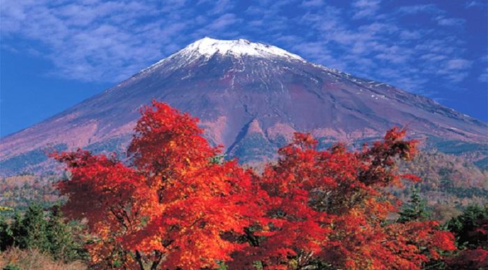 Ngắm lá phong đỏ Núi Phú Sĩ