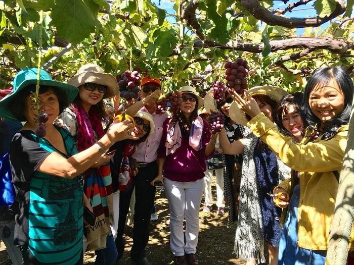 Quý khách thăm nhà Vườn và Hái trái cây Nhật Bản