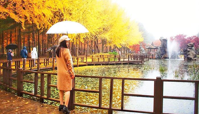 Mùa thu Nami đầy lãng mạn