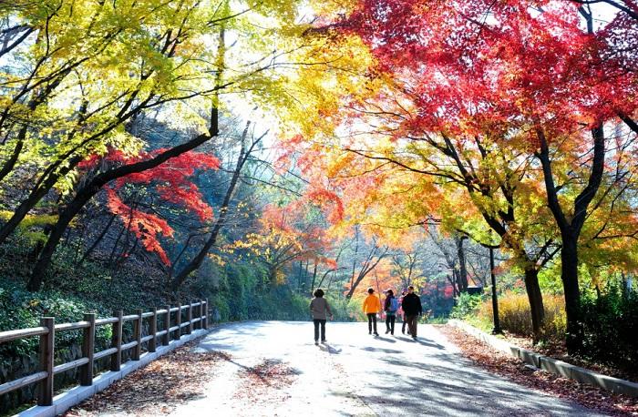 Núi Nam San Hàn Quốc với phong cảnh vô cùng đẹp