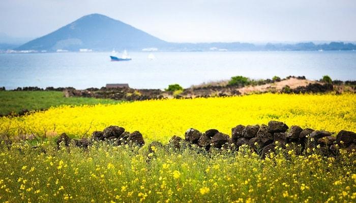 mùa-thu-trên-đảo-jeju