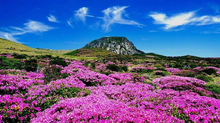 Vẻ đẹp tuyệt vời của hòn đảo Jeju