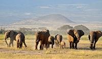 Khu bảo tồn Masai Mara