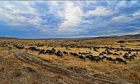 Khu bảo tồn thiên nhiên hoang dã Masai Mara