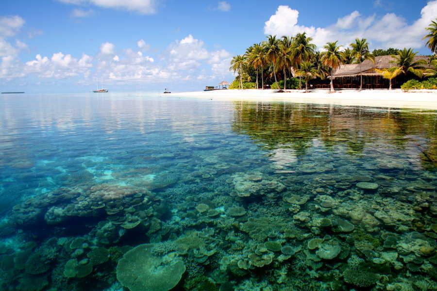 Chiêm ngưỡng những bãi san hô tuyệt đẹp