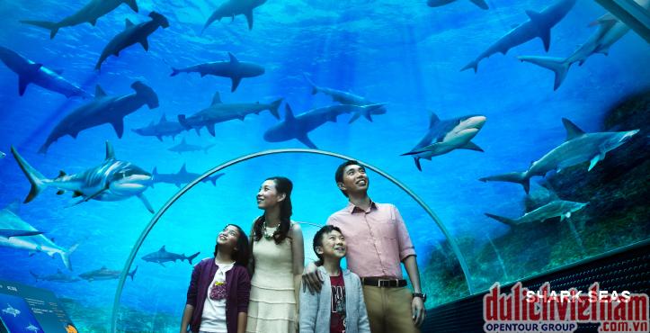 Thủy cung lớn nhất thế giới S.E.A Aquarium
