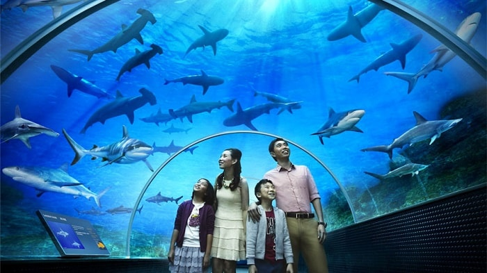 Khu đại dương nhân tạo S.E.A  Aquarium