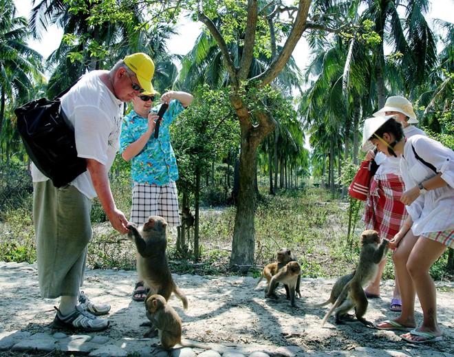 Bạn có thể vui đùa cùng các chú khỉ đáng yêu, ngộ nghĩnh