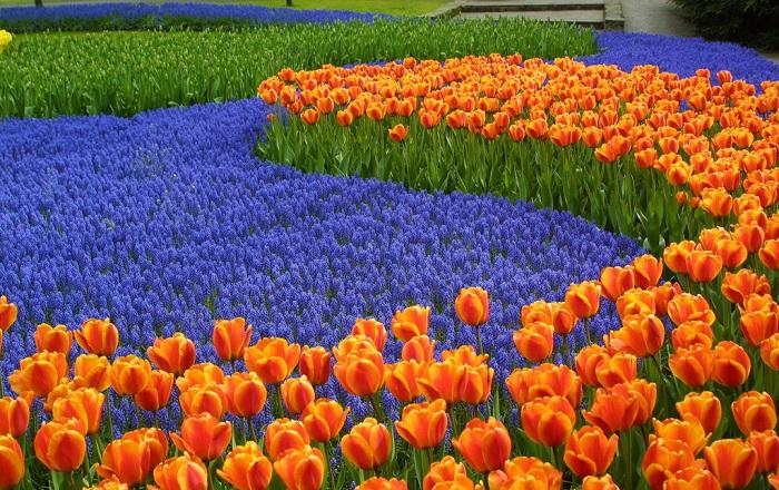 Tour châu âu mùa hoa tuip
