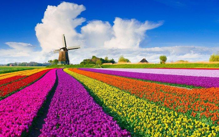 Lễ hội hoa tulip tại Hà Lan