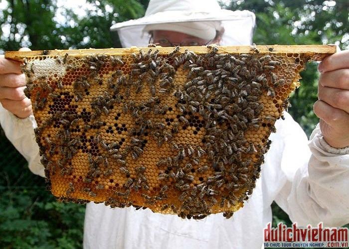Trại nuôi mật ong