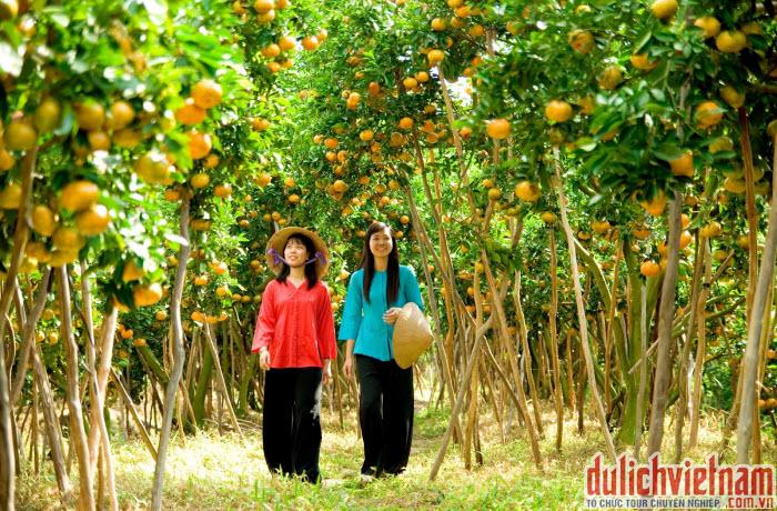 Vườn cây ăn trái
