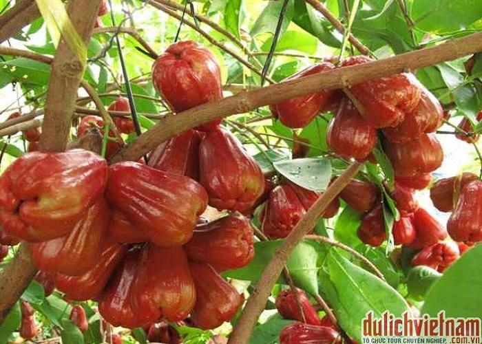 Vườn cây ăn trái miền Tây