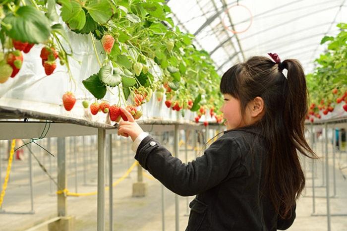 Trải nghiệm hái trái cây tận vườn