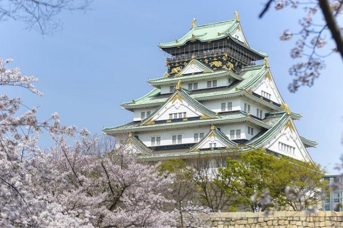 Lâu đài Osaka mua anh đào bung nở