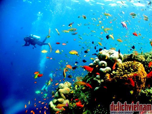 lặn-biển-ngắm-san-hô