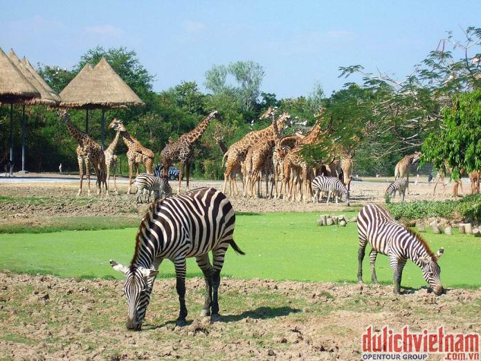 Vinpearl Safari Phú Quốc có tới 2000 loài động vật, đại diện cho 130 loài đặc trưng của Châu Phi và Ấn Độ