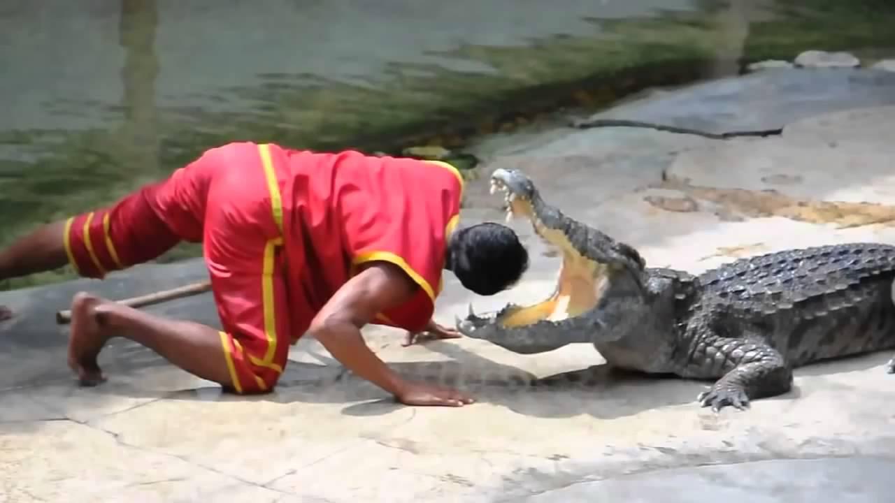 trại cá sấu