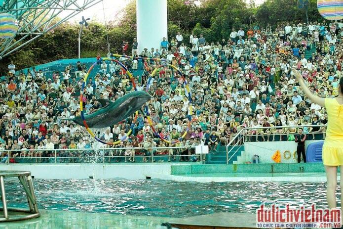 Biểu diễn cá heo ở Tuần Châu