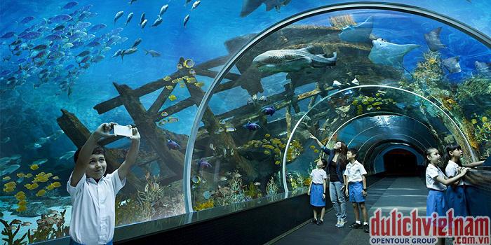 Thuỷ cung lớn nhất thế giới S.E.A Aquarium