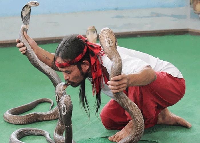 Trung tâm nghiên cứu rắn độc